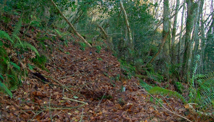 Decálogo para desfrutar do sendeirismo e coidar o medio natural